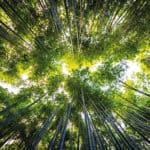 Bioenergy Europe Report: il punto sulle FER termiche