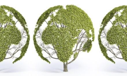 Un Green New Deal globale per dare forza all'economia sociale