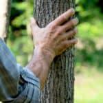 La situazione delle foreste italiane