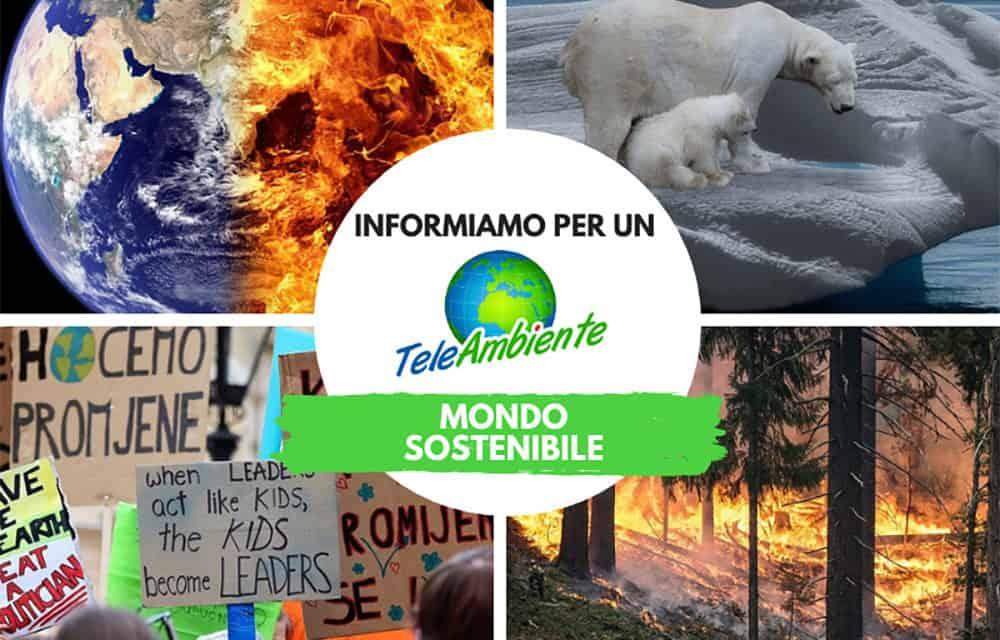 TeleAmbiente, eco-warriors in azione! Informazione, consapevolezza e sostenibilità
