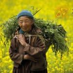 """""""Noi, il cibo, il nostro pianeta: alimentiamo un futuro sostenibile"""", visita la mostra di Fondazione Barilla"""